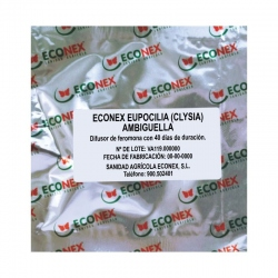 ECONEX EUPOCILIA (CLYSIA) AMBIGUELLA