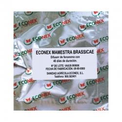 ECONEX MAMESTRA BRASSICAE (40 days)