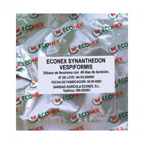 ECONEX SYNANTHEDON VESPIFORMIS (40 días)