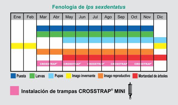 fenologia-de-ips-sexdentatus1.jpg