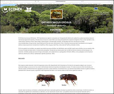 miniatura-pagina-web-thaumetopoea-pityoc