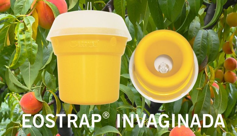 EOSTRAP® INVAGINADA