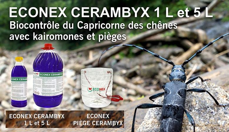 cerambyx